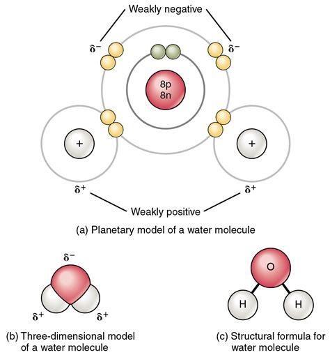 molecule diagram this figure shows the structure of a water molecule the