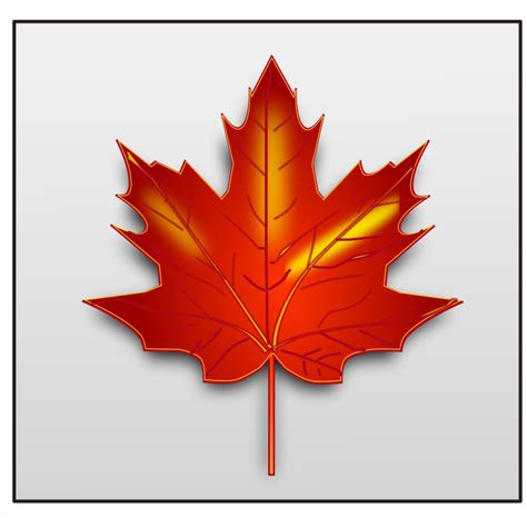 file maple leaf svg maple leaf free vector 4vector