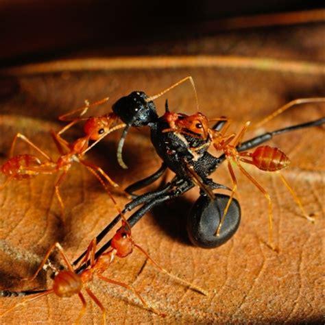 comment se d饕arrasser des fourmis dans une cuisine fourmi g 226 te bois dans la maison comment