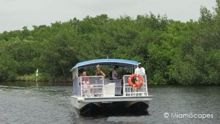 everglades national park boat tours mangrove wilderness our mangrove wilderness life in the florida mangroves
