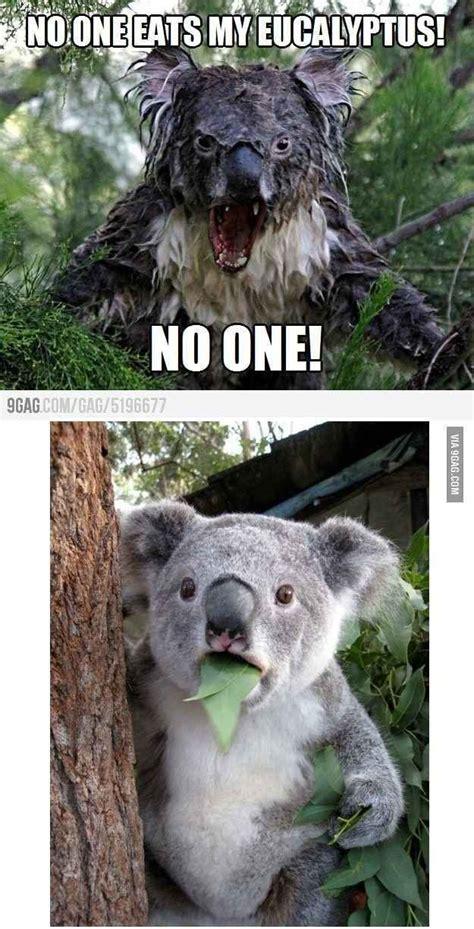 Angry Koala Meme - 192 best insanity wolf for president images on pinterest