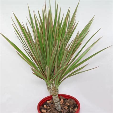 tropical foliage plants identification indoor tropical plant identification quotes