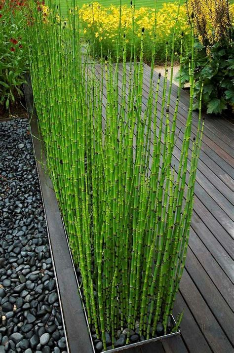 Incroyable Planter Des Bambous Dans Son Jardin #8: Jardin-paysager-herbe-magnifique-et-terrasse.jpg
