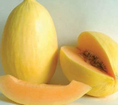 Benih Melon Madesta F1 benih melon pepaya melon crenshaw 5 biji non retail