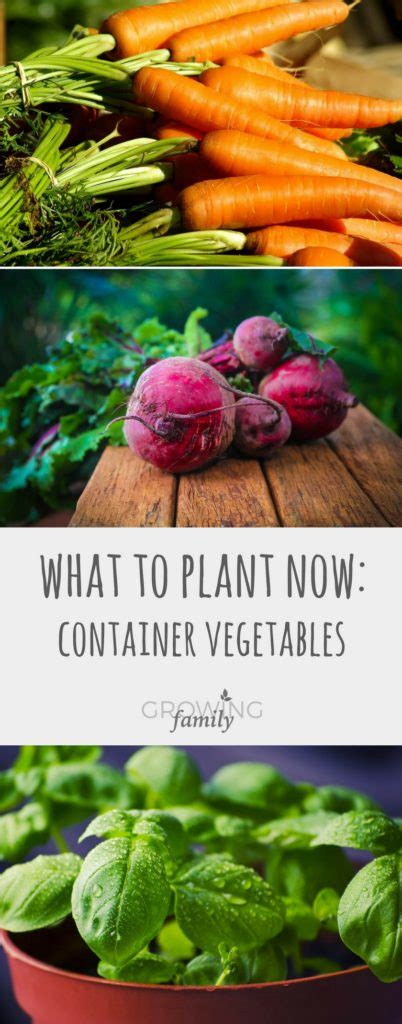 What To Plant Now Container Vegetables Growing Family What To Plant In Vegetable Garden Now