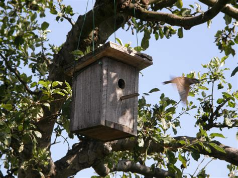 birdhouses joy studio design gallery best design