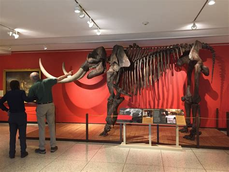 the of the peales in the philadelphia museum of adaptations and innovations books the mastodon in the museum underbelly