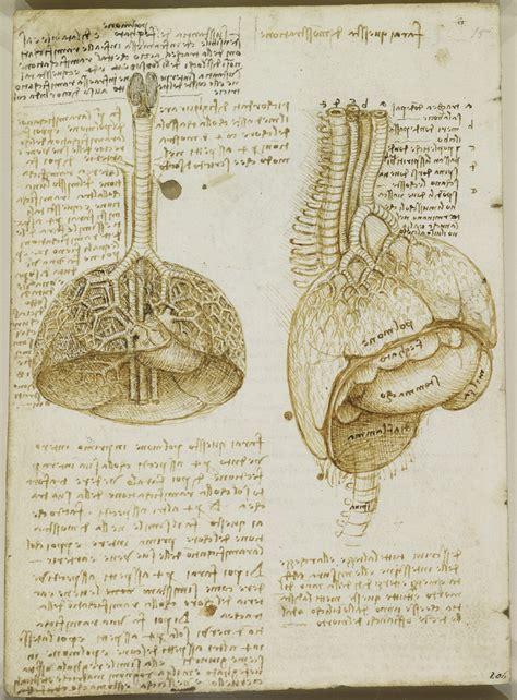tavole anatomiche la vescica e i polmoni leonardo modellianatomici it