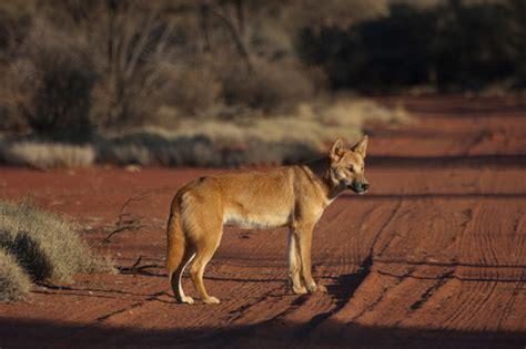 Tazmanian Referred For Blackberry 9900 9980 laws threaten australia s wildlife