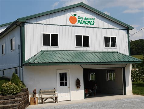 spring house farm spring house peach farm narvon pa orchard fruit lancaster county local
