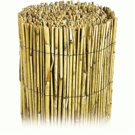 canisse en bambou 7198 canisse bambou wikilia fr