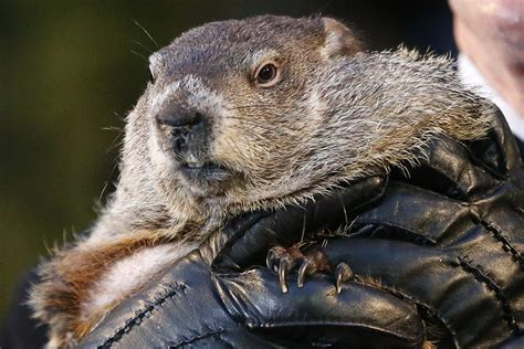the groundhog day five facts about groundhog day