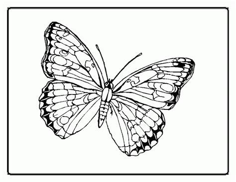 butterfly coloring pages momjunction butterfly coloring page coloring home