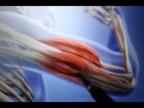 basics 8: musculoskeletal system (muscle movement) | doovi