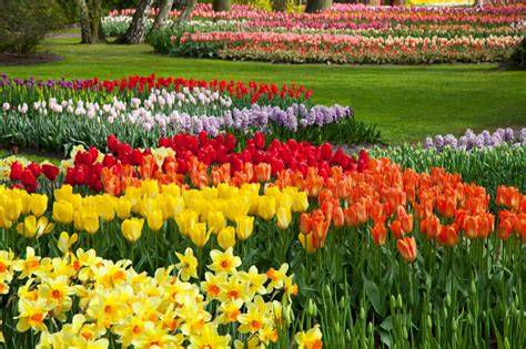 Colorful Flower Beds Free Stock Photo Public Domain Pictures Colorful Flower Garden
