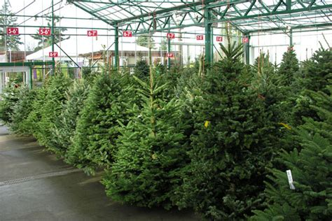 fresh cut christmas trees are available at green acres