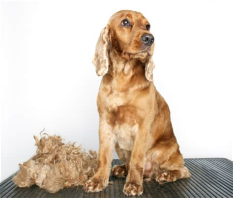 Pet Shedding by Shedding In The Fall