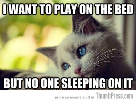 Sad Cat Meme - sad cat is sad 25 hilarious first world problems cat meme