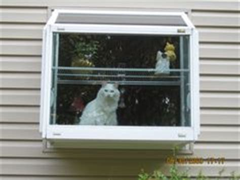 cat veranda window box 1000 images about stewie and annabelle on cat