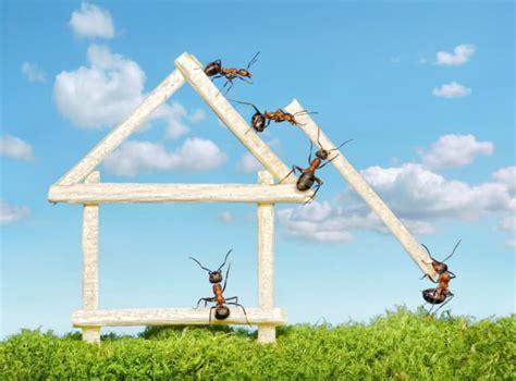rimedi contro le formiche in cucina rimedi naturali contro le formiche non sprecare