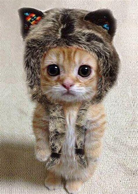 cats in hats are too adorable slapped ham