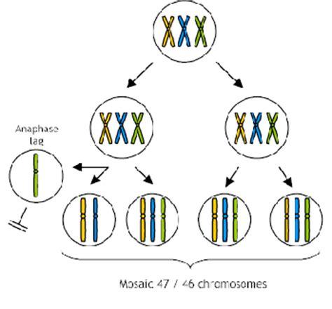 mosaic pattern in genetics mosaic genetics
