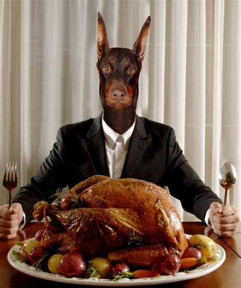 is turkey ok for dogs thanksgiving food you can with your