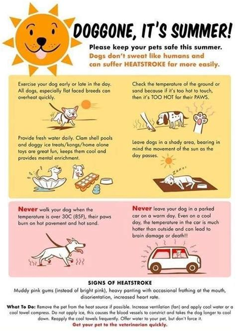 tips on a puppy 17 best images about para mi tico on language for dogs and