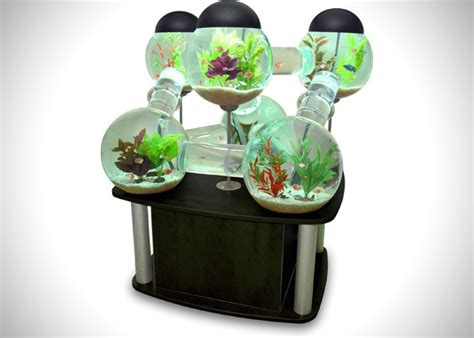 cool things to have in your room labyrinth fish tank aquarium hiconsumption