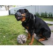 Everyday Light Weight Super Ventilation Rottweiler Muzzle