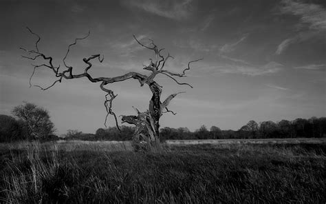 grayscale wallpaper trees grayscale wallpaper allwallpaper in 14156 pc en