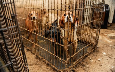 kill shelters no kill animal rescue is a disaster for animal welfare aeon essays