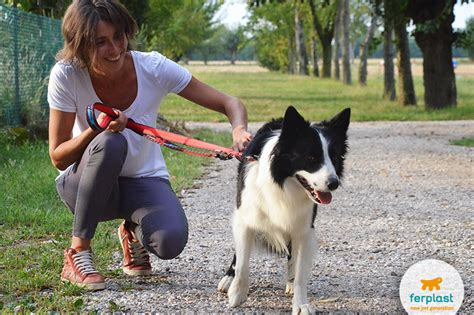 i cani testi misurare intelligenza ferplast