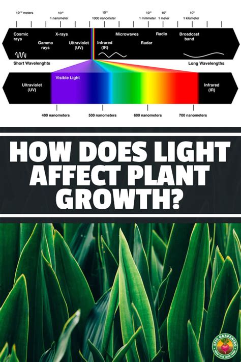 light affect plant growth epic gardening