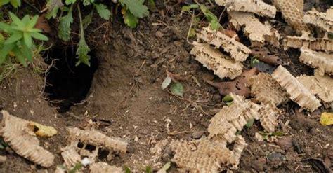 marder im garten erkennen katzenkot im garten katzenschreck katzen vertreiben mit