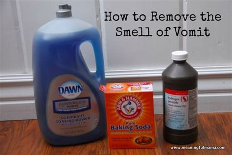 How To Remove The Vomit Smell From Anything Two Dogs