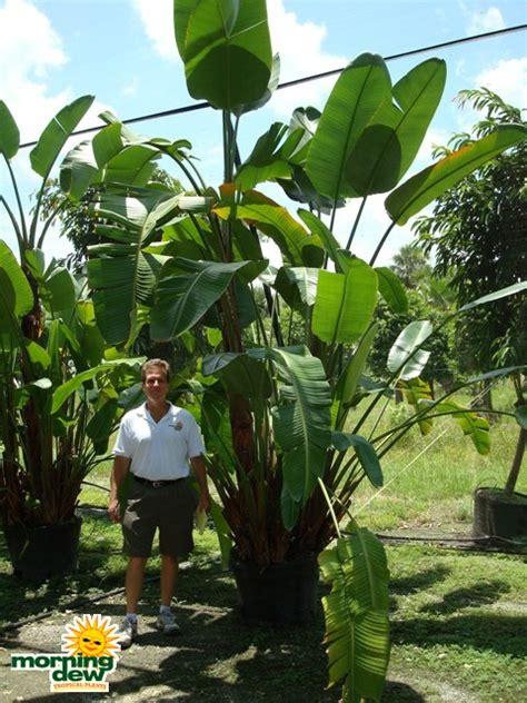 Shade Trellis Strelitzia Morning Dew Tropical Plants