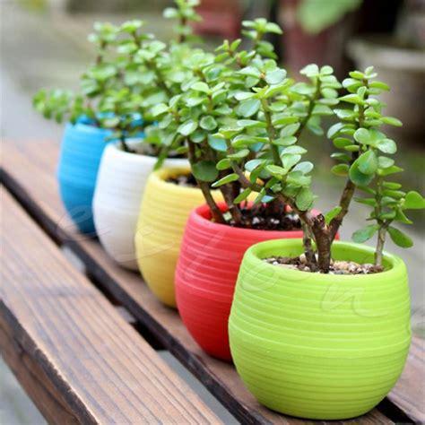 colourful mini flower pot  succulent plants