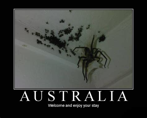 Scary Spider Meme - australian spiders they re not so bad scientific scribbles