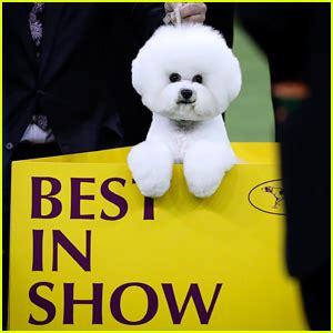 who won the show who won best in show at westminster show 2018 report