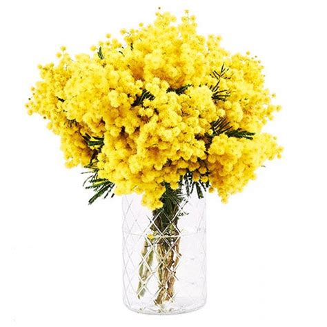 mimose fiori bouquet mimosa floraqueen