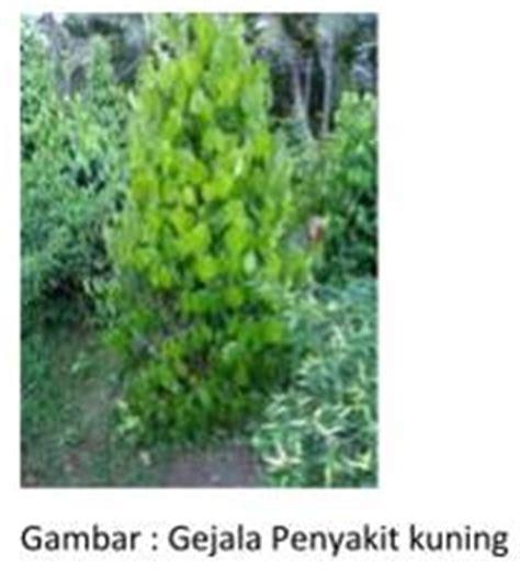 Furadan Fungisida erlanardianarismansyah studi opt penting tanaman lada dan