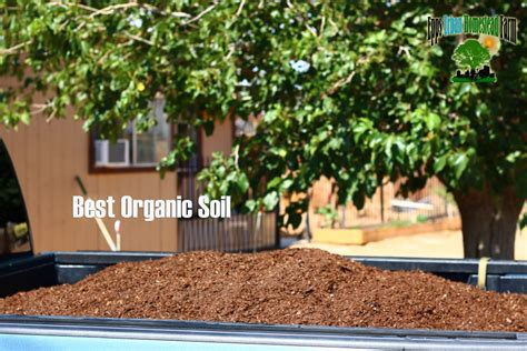4 small grow a moringa tree starter kit