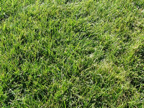 top 28 bermuda bluegrass best kinds of grass for your