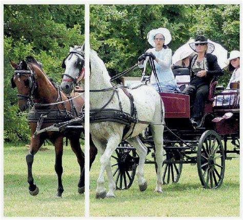 carrozza inglese carrozze cavalli 187 una festa in stile inglese alla