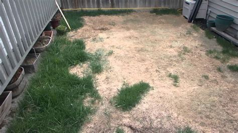do dogs need grass backyard backyard fail dog pee destroys grass turf overseeding