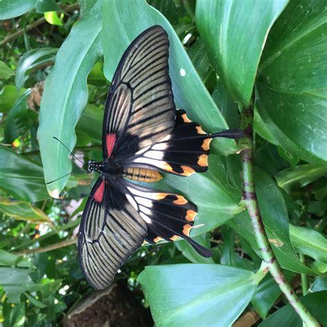 casa delle farfalle casa delle farfalle vienna viaggi vacanze e turismo