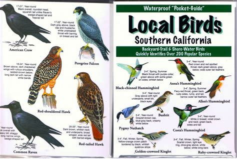 southern california local birds
