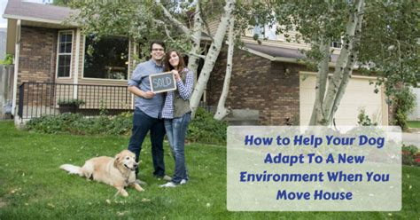moving a dog to a new house thedogtrainingsecret com