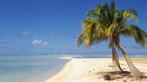 download kumpulan wallpaper buah kelapa www buahaz com